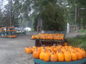 Glastonbury CT pumpkins