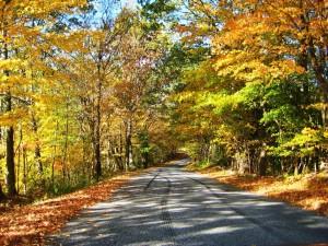 Colchester CT autumn